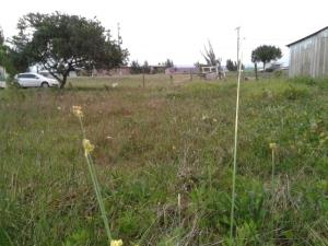 Dois terrenos junto ou separado para venda na Av Paraguassu Capão da Canoa RS no Jardim Beira Mar.